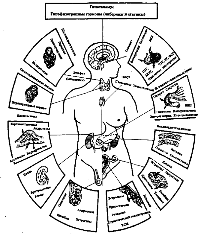Exercise Therapy In Diseases Of The Endocrine